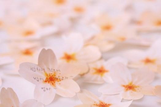 cherryblossom02 525x350 กระดาษโพสต์ อิท ที่ร่วงโรย Cherry blossom memo stickers by appree