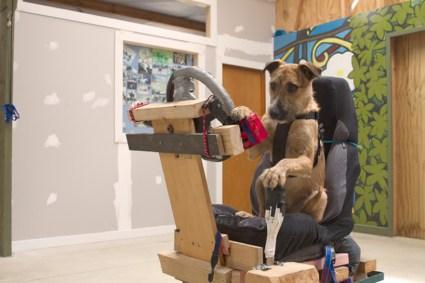 driving dogs สอนน้องหมาขับรถ 17 - cars