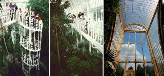 qq 550x257 Palm House at Kew Garden ศูนย์รวมปาล์มจากทั่วโลก