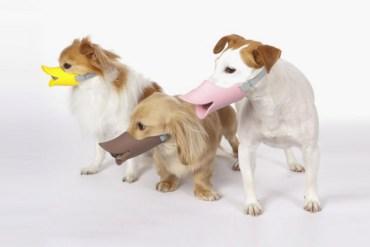 """""""Quack"""" แคว๊ก!! ตะกร้อครอบปากน้องหมาสุดฮา 20 - หมา"""