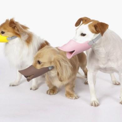 """""""Quack"""" แคว๊ก!! ตะกร้อครอบปากน้องหมาสุดฮา 21 - muzzle"""