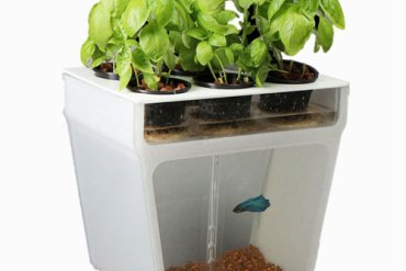 Self-Cleaning Fish Tank Garden 20 - Plant