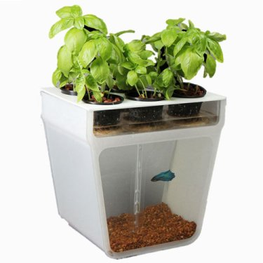 Aquaponics-self-cleaning-fish-tank-garden