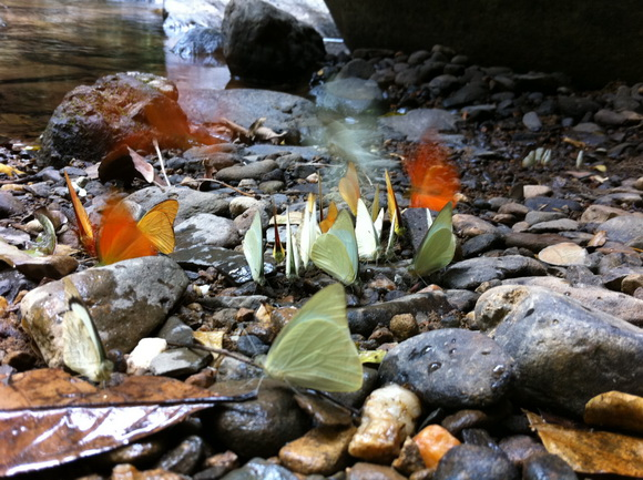 เที่ยวน้ำตก ชมผีเสื้อ ดูช้างป่า ที่ป่าละอู ..ใกล้ๆหัวหิน 13 - Pa La-U Waterfall