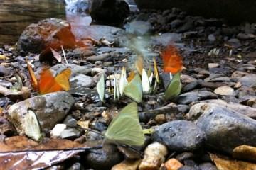 เที่ยวน้ำตก ชมผีเสื้อ ดูช้างป่า ที่ป่าละอู ..ใกล้ๆหัวหิน