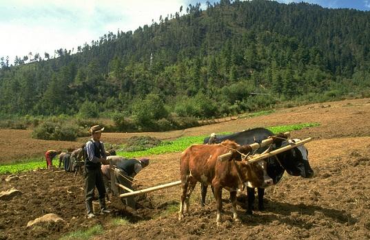 ภูฏาน ประกาศเป็นประเทศปลอดสารพิษ 100% แห่งแรกในโลก 13 - Bhutan