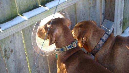 PetPeekWindow Pet Peek Fence Window For Dog หน้าต่างเปิดโลกสำหรับเจ้าสุนัขแสนรัก