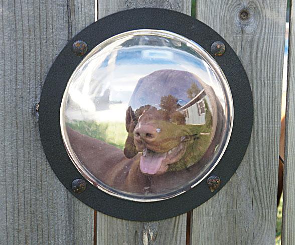 SkipperPetPeek Pet Peek Fence Window For Dog หน้าต่างเปิดโลกสำหรับเจ้าสุนัขแสนรัก