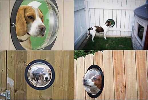 pet peek 3 Pet Peek Fence Window For Dog หน้าต่างเปิดโลกสำหรับเจ้าสุนัขแสนรัก