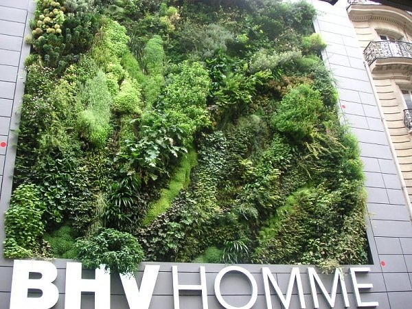 Living wall..สวนแนวตั้ง ที่ไม่ได้เป็นแค่ชิ้นงานศิลปะขนาดใหญ่ แต่ยังเป็นผนังที่มีชีวิตและลมหายใจ ให้ความสุขกับผู้พบเห็น 13 - living wall