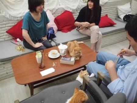 307297 255277137939859 1743889296 n 450x337 PURR CAT CAFE CLUB คลับแมวเหมียว