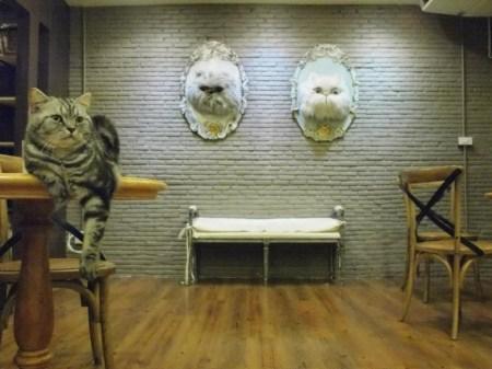 76091 255277214606518 617925669 n 450x337 PURR CAT CAFE CLUB คลับแมวเหมียว