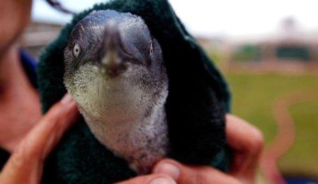 %name Knit for penguins โครงการช่วยเหลือถักโครเชต์ มอบอุ่นให้เพนกวิน