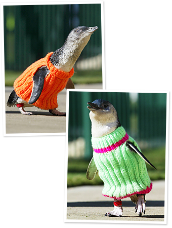 102111-penguins-sweaters-340