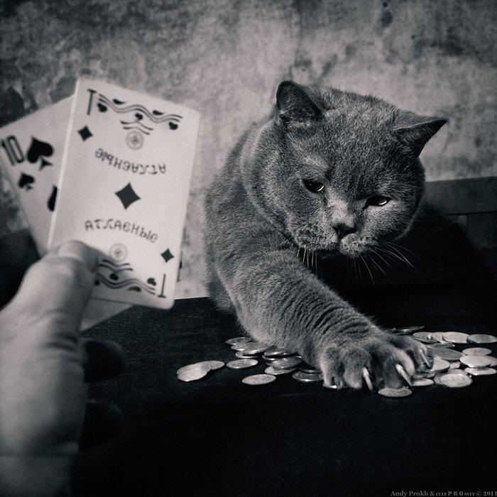 25560420 221706 เก็บความทรงจำดีๆไว้กับภาพขาวดำ..มิตรภาพระหว่างเด็กสาว 4 ขวบ กับแมวจอมกวน..