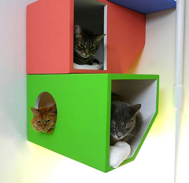 25560422 161411 Catissa – บ้านสไตล์โมเดิร์น 4 ชั้น สำหรับแมวเหมียว