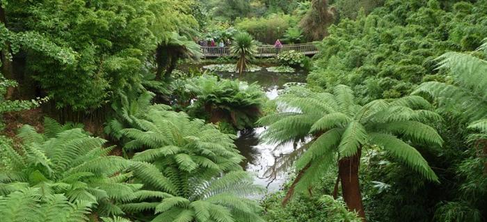 25560430 133702 The Lost Gardens of Heligan...สวนอายุ 400ปี ที่หายไปจากโลกนี้เกือบ 100ปี