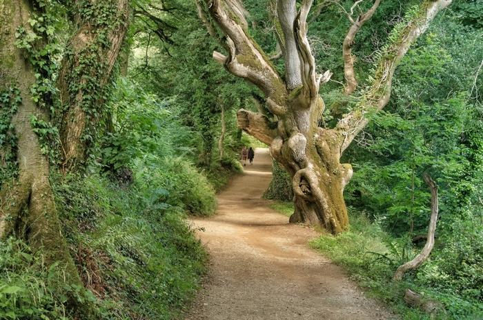 25560430 140257 The Lost Gardens of Heligan...สวนอายุ 400ปี ที่หายไปจากโลกนี้เกือบ 100ปี