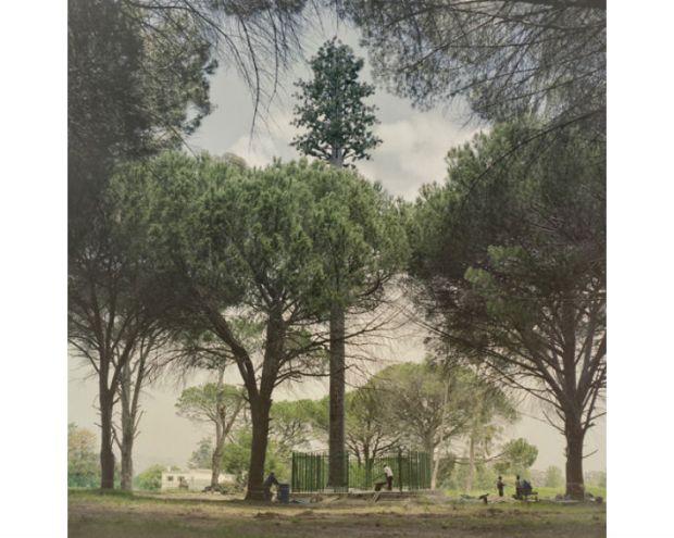 Invasive Species Dillon Marsh 9 620x495 Cell PHone Tree.. ต้นไม้ยักษ์สายพันธุ์ใหม่ของโลกยุคดิจิตอล