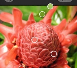 'Adobe Kuler' app  ให้เราสร้าง color palettes จากสิ่งรอบๆตัว 2 - colour palettes