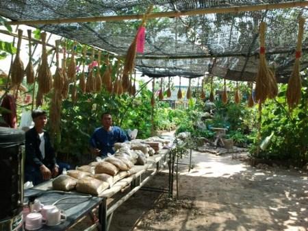 426474 466937660038523 1483716089 n 450x337 Seed Exchange ปลูกกิน ปลูกเก็บ ปลูกอนุรักษ์(พันธุ์แท้)พันธุ์พื้นบ้าน