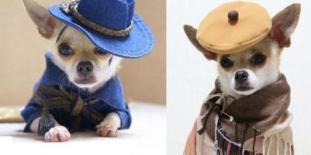 montjiro-anjing-paling-fashionable-di-dunia