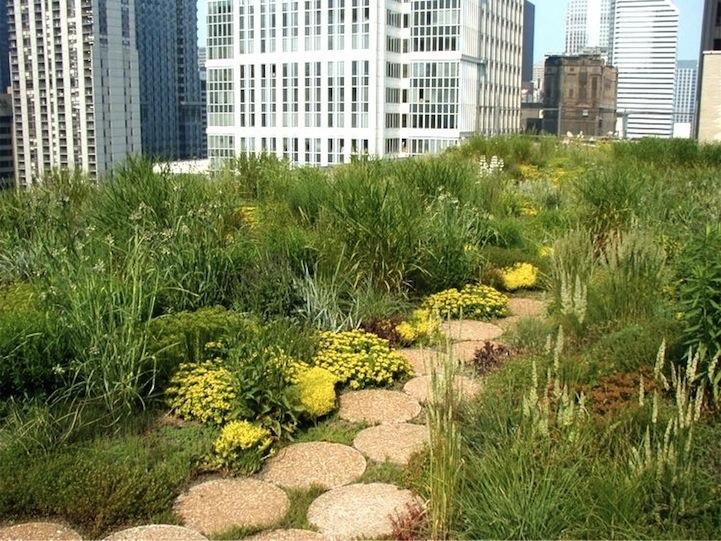 25561017 111521 ต้นไม้ 20,000 ต้น บนหลังคา City Hall เมืองชิคาโก้ ช่วยลดความร้อน เก็บน้ำฝน และให้ความสุขกับคนเมือง