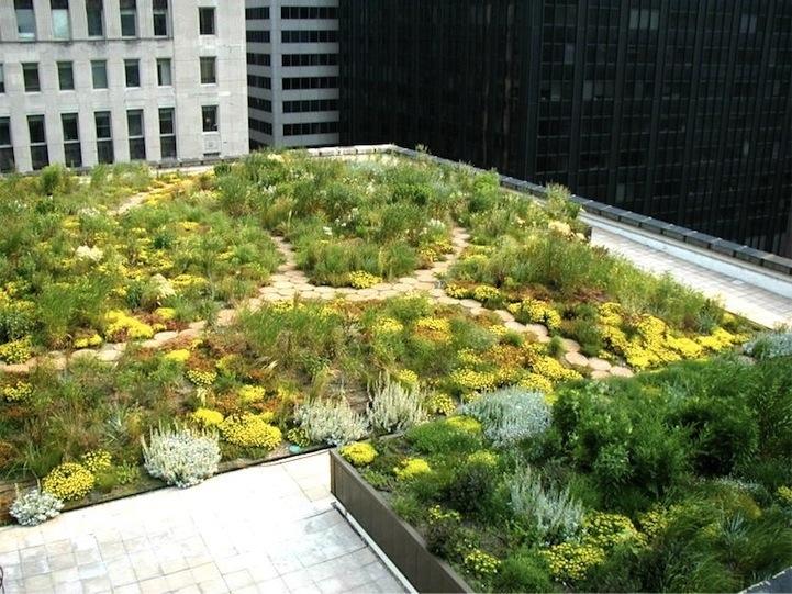 25561017 111526 ต้นไม้ 20,000 ต้น บนหลังคา City Hall เมืองชิคาโก้ ช่วยลดความร้อน เก็บน้ำฝน และให้ความสุขกับคนเมือง