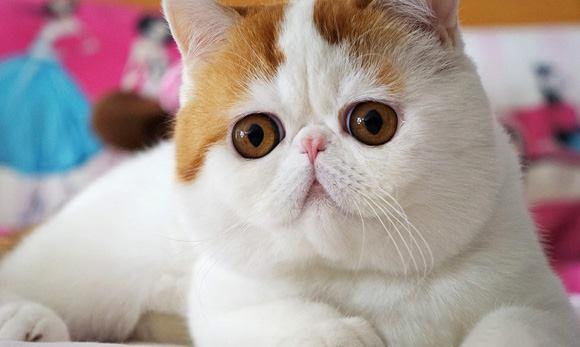 Snoopybabe แมวเซเลบฯ บนโลกออนไลน์ 30 - แมว