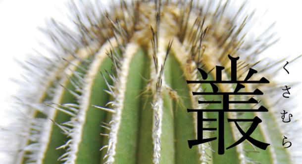 8276 main Qusamura นักจัดดอกไม้ ที่ชื่นชอบในความงามของต้นกระบองเพชร