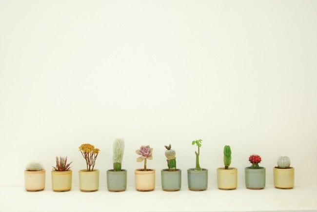 tumblr m6dwipkDzf1qbi5reo1 1280 650x435 Qusamura นักจัดดอกไม้ ที่ชื่นชอบในความงามของต้นกระบองเพชร