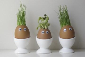 แก๊งค์หัวเขียว..ไอเดียกระถางจากเปลือกไข่ 10 -