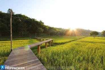 ไร่แสงอรุณ จ.เชียงราย Raisaengarun 13 - GREENERY
