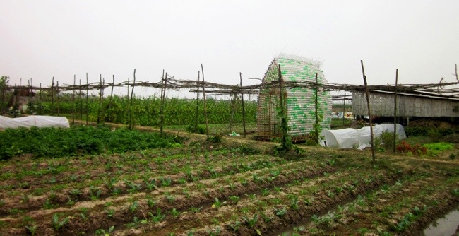25570312 172724 โรงอนุบาลผัก ทำจากไม้ไผ่ และขวดพลาสติก ความร่วมมือระหว่างคนในเมือง และเกษตกรในชนบท