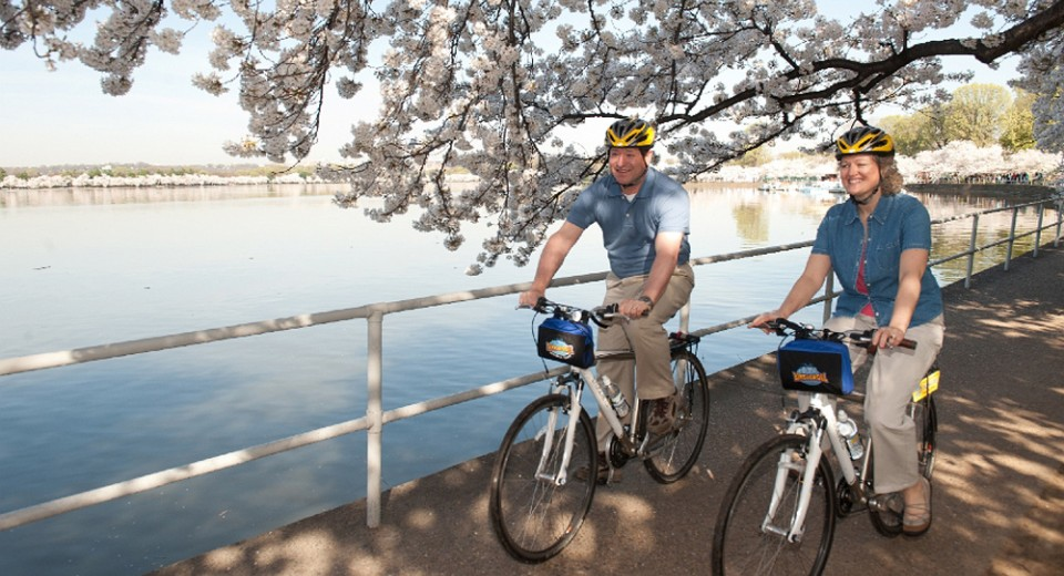 Biking cherryblossoms 0 เทศกาลซากุระ  National  Cherry Blossom Festival