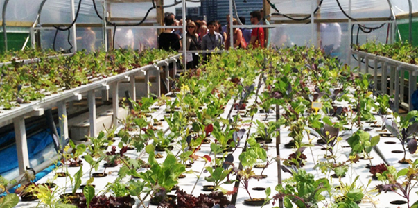 wpid queens university urban agriculture laboratory 7 ตัวอย่างฟาร์มเพาะปลูกในเมือง..แนวโน้มของสถาปัตยกรรมและการวางแผนเมืองในอนาคต
