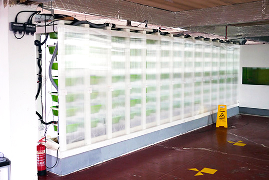wpid queens university urban agriculture laboratory ตัวอย่างฟาร์มเพาะปลูกในเมือง..แนวโน้มของสถาปัตยกรรมและการวางแผนเมืองในอนาคต