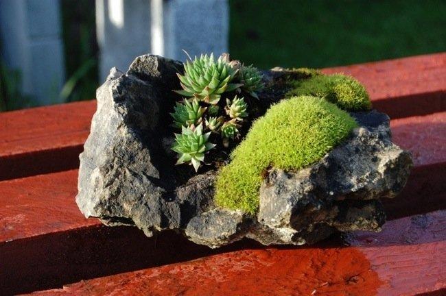 25570419 150238 Kusamono..สวนกระถางแบบญี่ปุ่นที่นำเอาธรรมชาติมาย่อไว้ในกระถางใบเล็กๆ