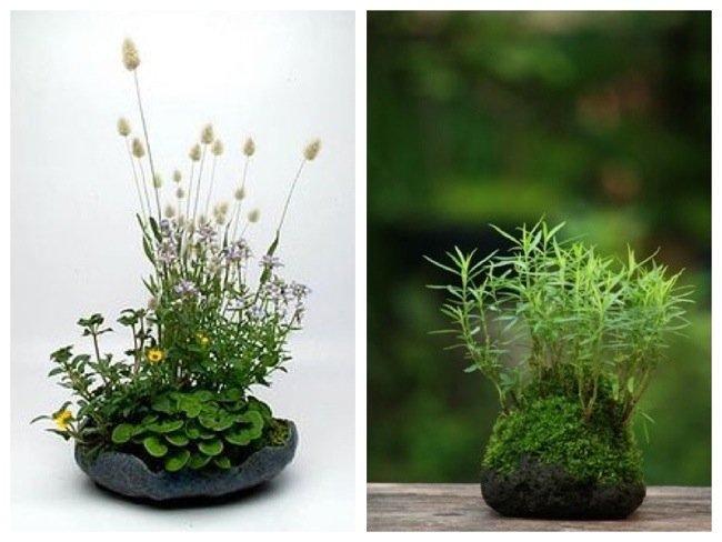 25570419 150324 Kusamono..สวนกระถางแบบญี่ปุ่นที่นำเอาธรรมชาติมาย่อไว้ในกระถางใบเล็กๆ