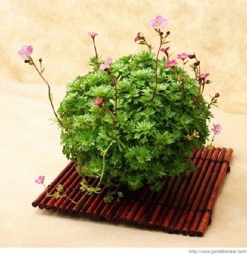 25570419 150549 Kusamono..สวนกระถางแบบญี่ปุ่นที่นำเอาธรรมชาติมาย่อไว้ในกระถางใบเล็กๆ