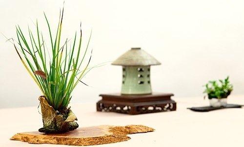 25570419 150603 Kusamono..สวนกระถางแบบญี่ปุ่นที่นำเอาธรรมชาติมาย่อไว้ในกระถางใบเล็กๆ