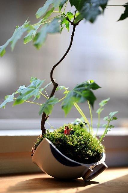 image4 Kusamono..สวนกระถางแบบญี่ปุ่นที่นำเอาธรรมชาติมาย่อไว้ในกระถางใบเล็กๆ