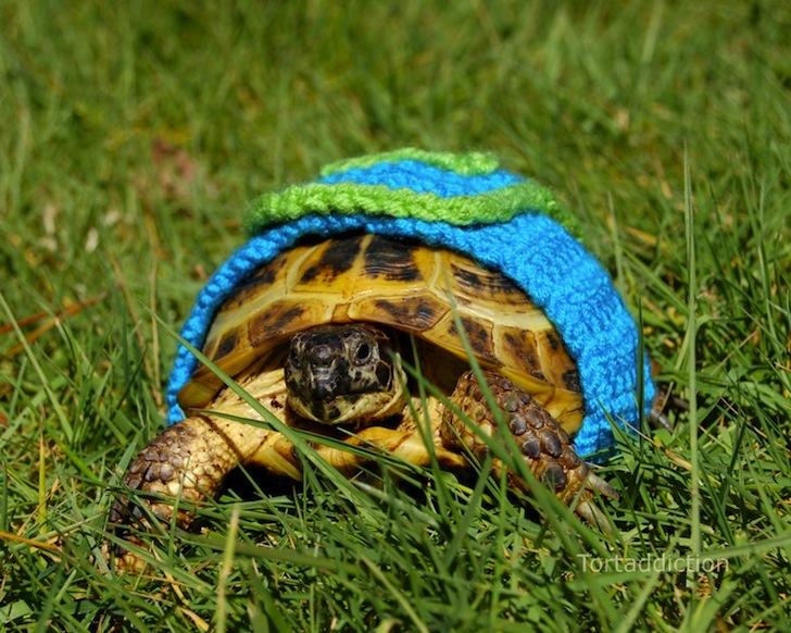 tortoise cozie blue green ถ้กเสื้อไหมพรมให้เต่าน้อย