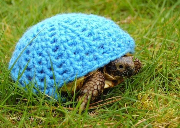 tortoise cozie blue ถ้กเสื้อไหมพรมให้เต่าน้อย