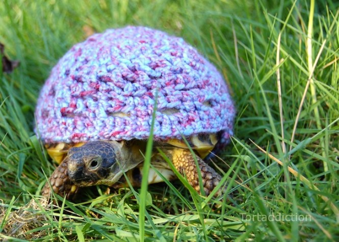 tortoise-cozie-purple