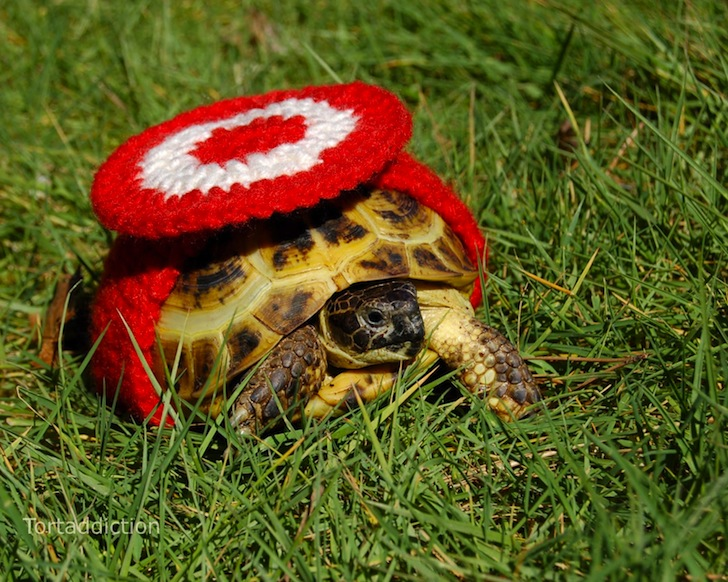 tortoise-cozie-red-and-white