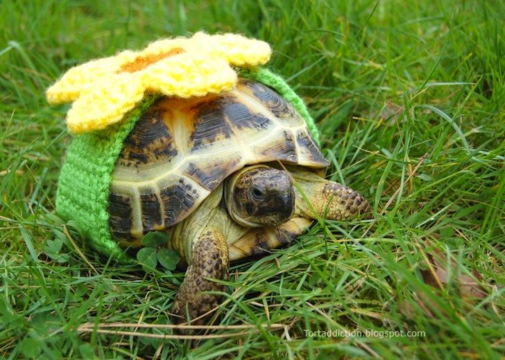 tortoise cozie yellow flower ถ้กเสื้อไหมพรมให้เต่าน้อย