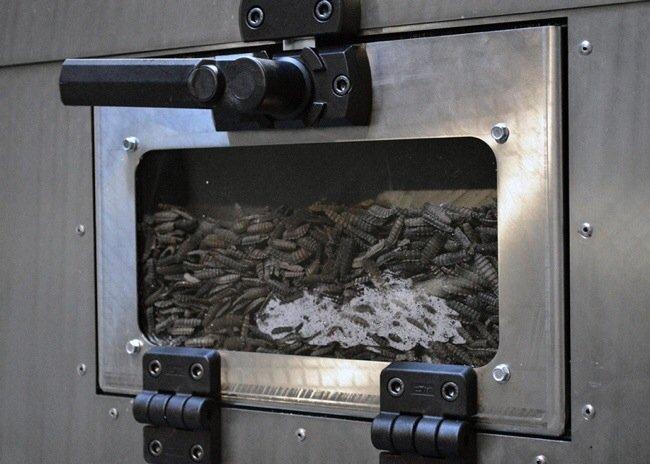 20140505 101623 Fly Factory ..โรงงานผลิตแมลง..รสชาติดีเหมือนไก่..แหล่งผลิตอาหารอนาคต