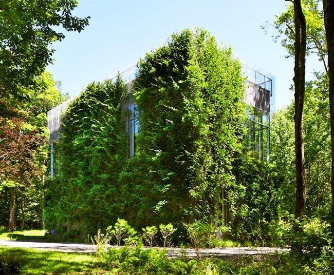 20140505 210337 บ้าน และแกลลอรี่ศิลปะ ที่ห่มคลุมด้วยชีวิตสีเขียวที่งดงาม