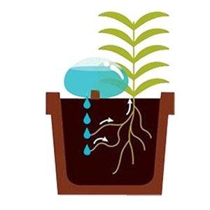20140524 213104 77464678 ให้น้ำต้นไม้แบบประหยัดน้ำ..จากก้อนน้ำใสๆ..แนวZen..